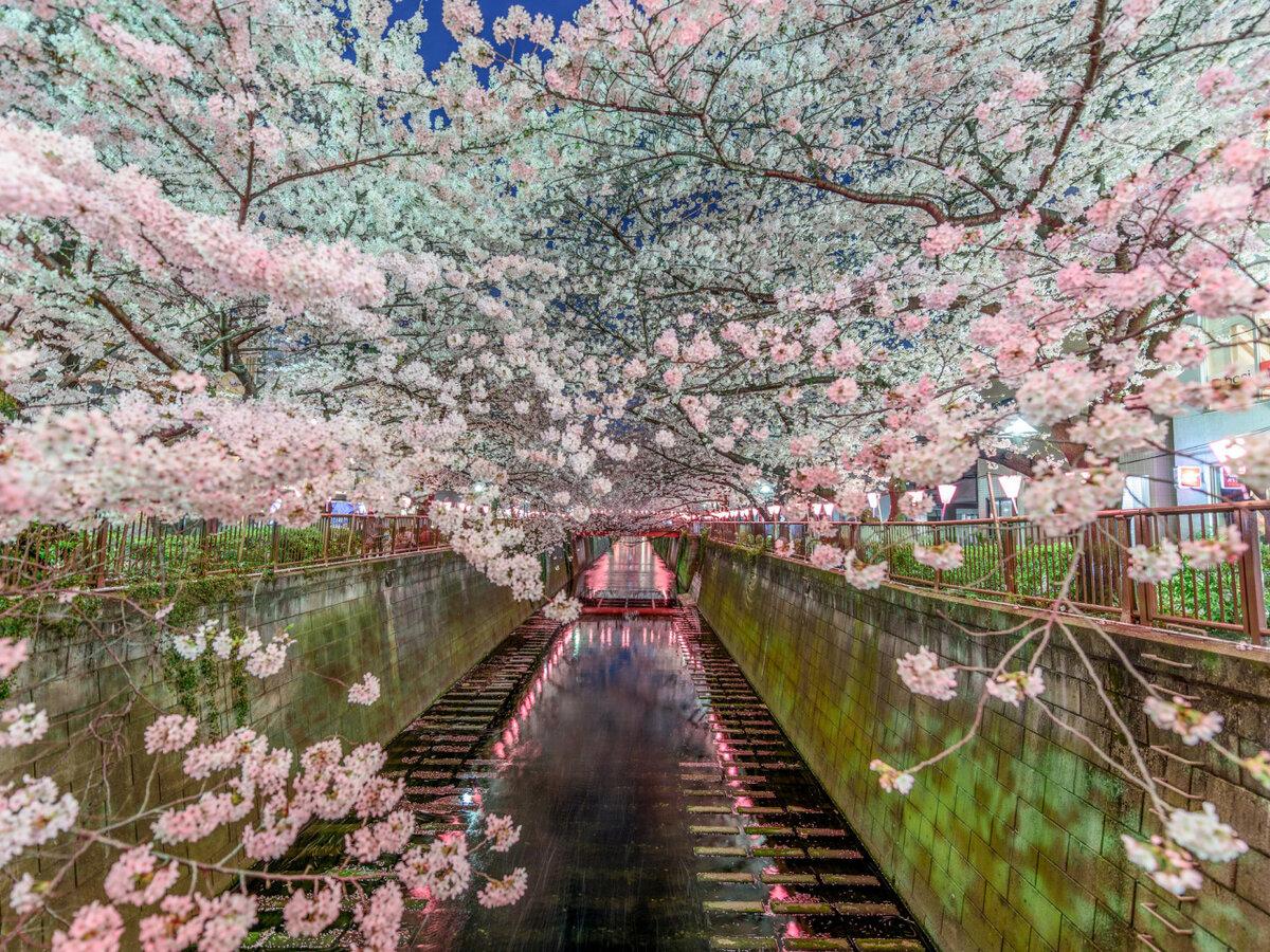 Межсезонье между Весной и Летом 2019 - начало Межсезонья по китайскому календарю