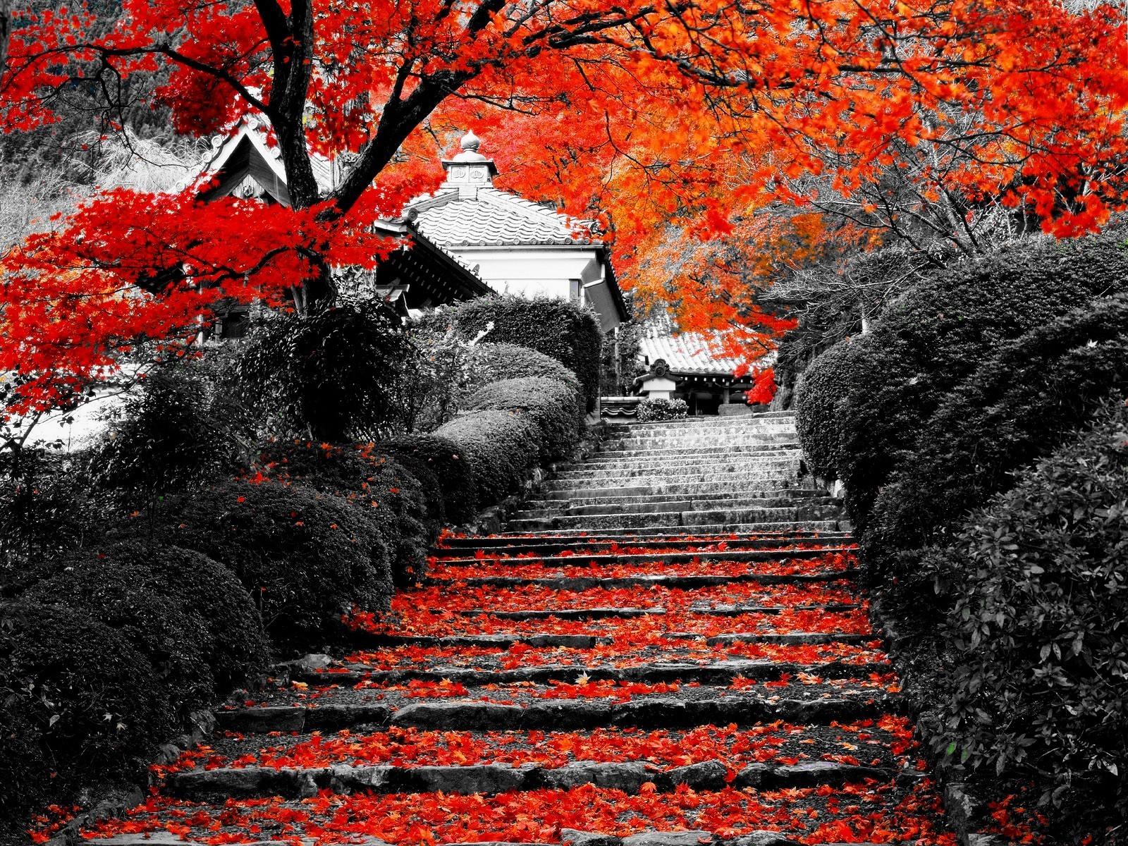 Осень 2020 - начало сезона по китайскому календарю