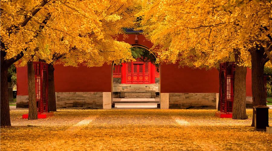 Осень 2019 - начало сезона по китайскому календарю