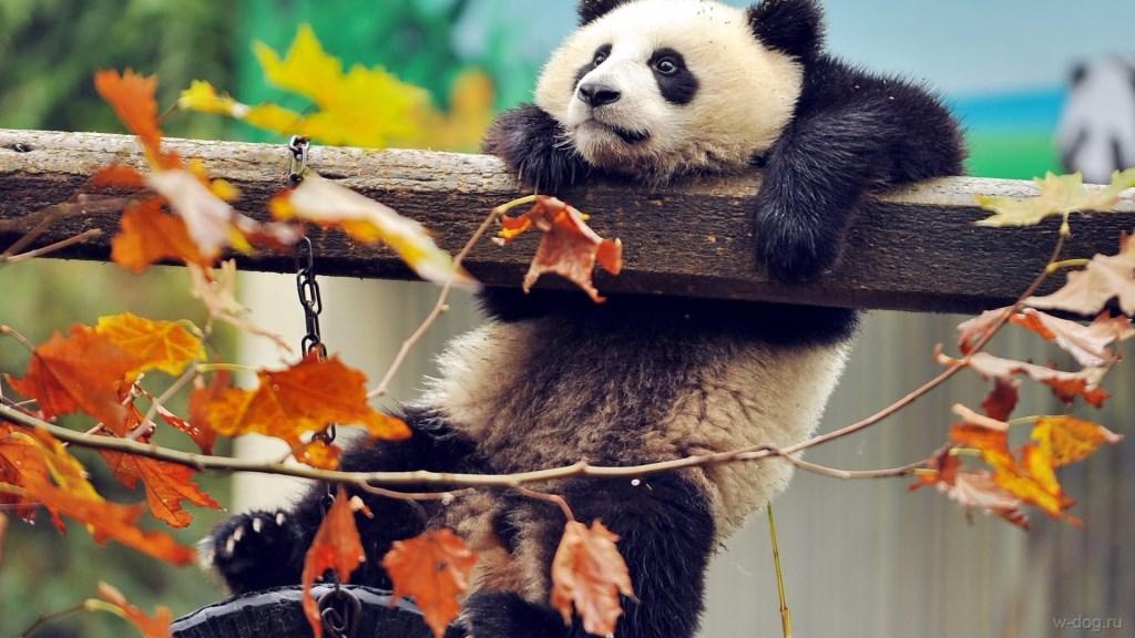Осень 2016 - начало сезона по китайскому календарю
