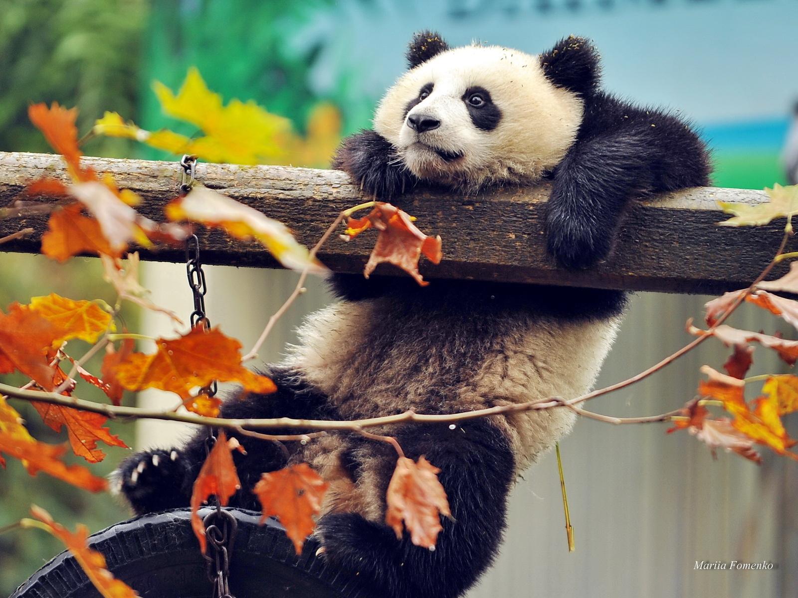 Осень 2018 - начало сезона по китайскому календарю