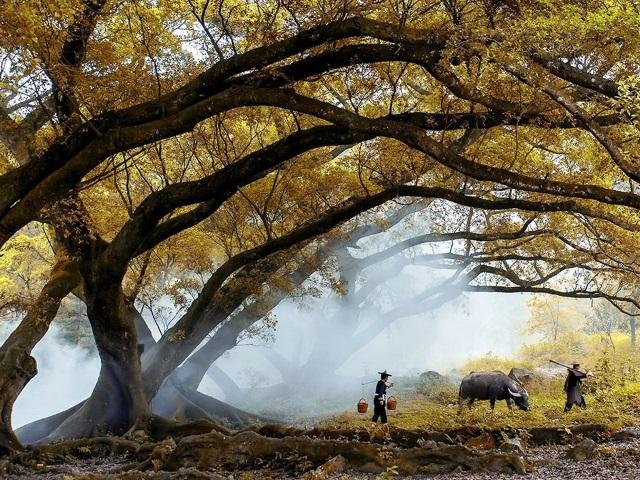 Межсезонье между Осенью и Зимой в 2015 году по китайскому календарю