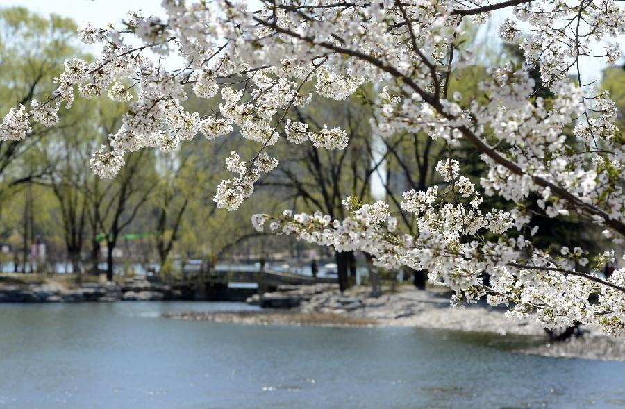 Весна 2018 - начало сезона по китайскому календарю