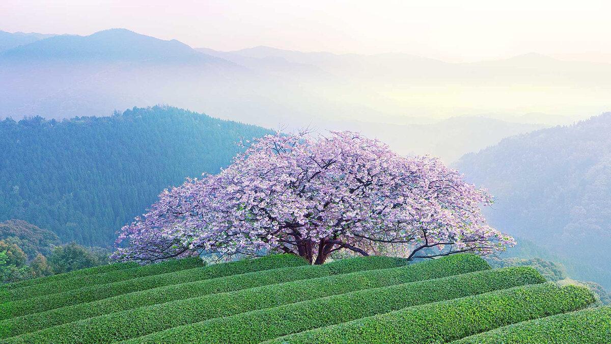 Весна 2019 - начало сезона по китайскому календарю