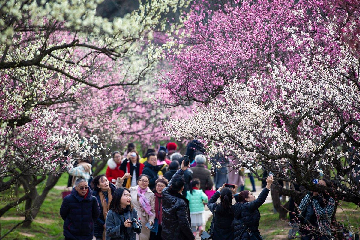 Весна 2021 - начало сезона по китайскому календарю