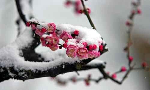 Зима - особенности сезона по традиционной китайской медицине